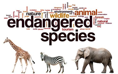 endangered-500